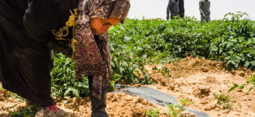 A journey among Syrian women being exploited in Jordan's fields