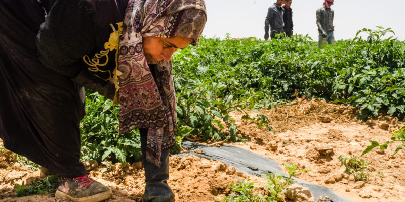 A journey among Syrian women being exploited in Jordan's fields ⁄