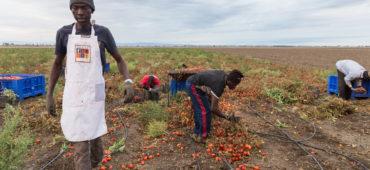 Un mese cruciale per il futuro dell'agricoltura europea e dei suoi lavoratori stranieri